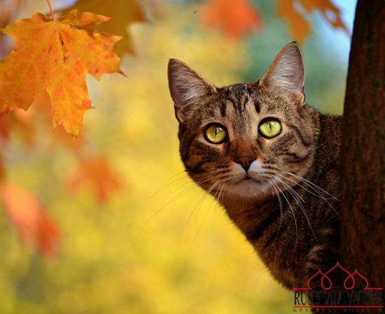 fall 2014 cat